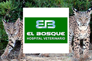 Web del Hospital Veterinario El Bosque.